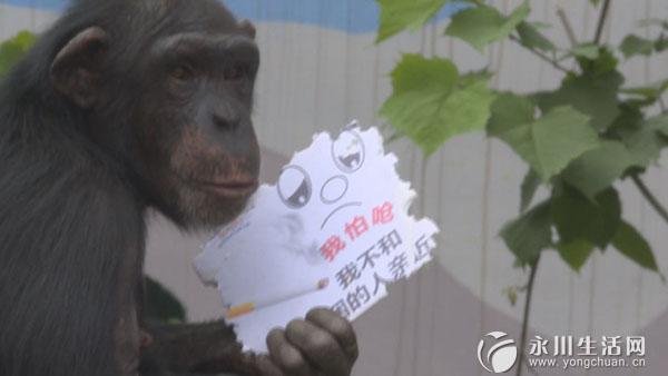 小熊猫等珍稀动物也纷纷加入到举牌宣传